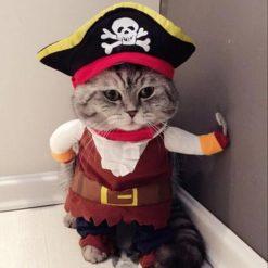 Cat Funny Clothes