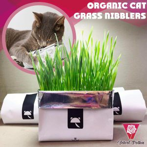 Organic Cat Grass Nibblers