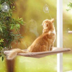 Cute Cat Hammock
