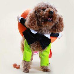 Poochy Pumpkin Halloween Outfit